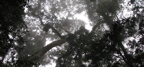 Mexican Cloud Forest