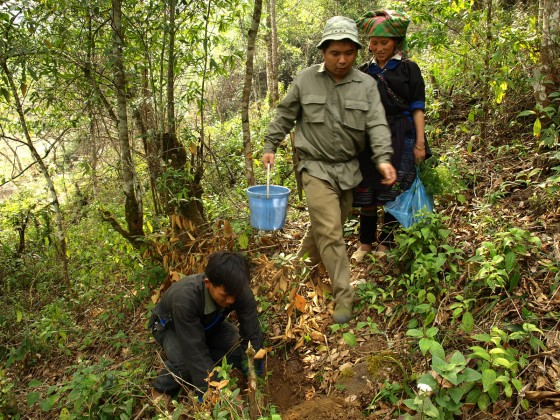 Planting Taiwania seedlings in the wild (credit: CPC Vietnam)