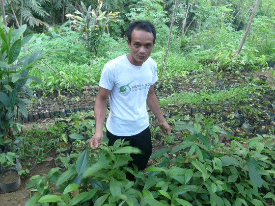 Community facilitator, Siswanto, with seedlings of his favourite tree, the Ketatai