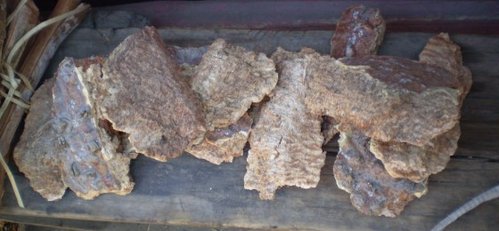 Outer-bark-from-baobabs-sold-as-medicine-by-D.-Andriafidison