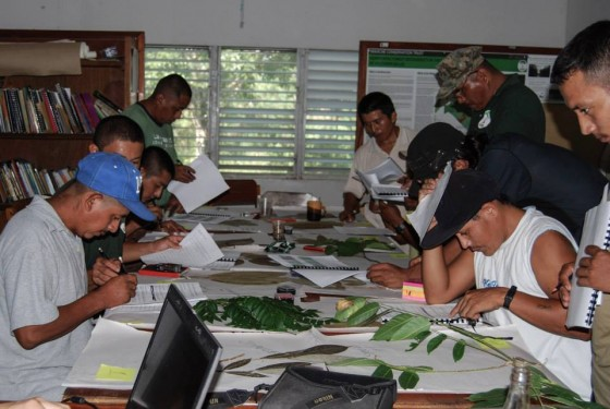Rangers taking a tree identification course (Credit: Ya'axché Conservation Trust).
