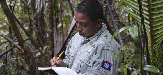 Yaaxche-rangers-monitoring-rosewood-trees-during-a-patrol-in-the-Golden-Stream-Corridor-Preserve
