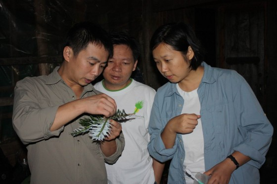 Project team taking a closer look at a specimen. Credit: Xingfeng/FFI