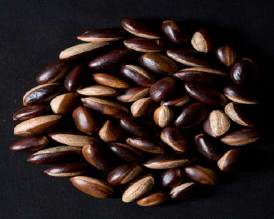 pouteria_adolfi-friedericii_seeds small size for website