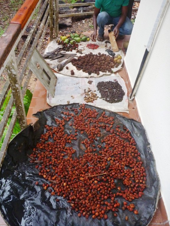 Seed_collection_Okomu_National_Park_Edo_State